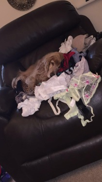 boo asleep on bras 4 Feb 18